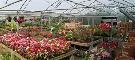 garden nursery me plant nursery san antonio thenurseries