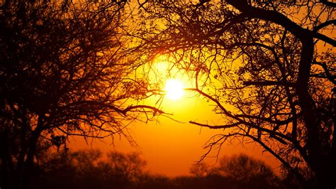 South Africa, Nature, National Park, Sun, Trees Wallpapers