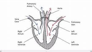 Heart Science Diagram