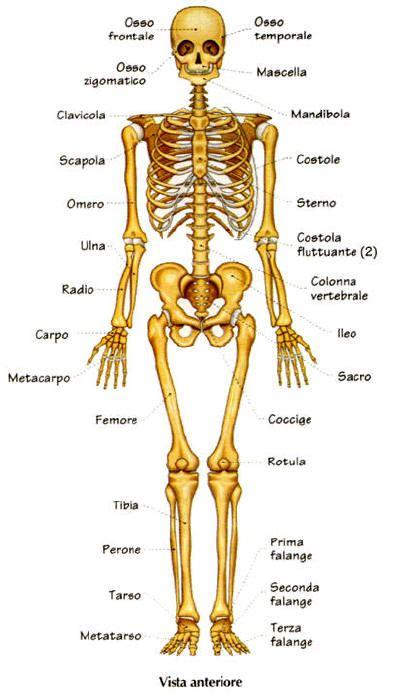 interno corpo umano 28 anatomia humana 211 rg