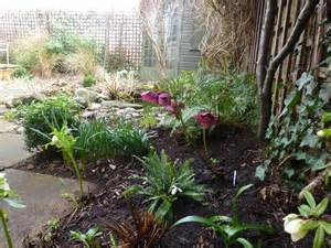 plants for facing gardens north facing shade ursula s cambridge garden