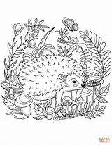 Hedgehog Coloring Printable Easy Drawing Forest Animals Supercoloring Paper Version Getcolorings Dot Categories sketch template