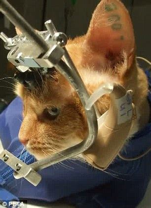 kittens skulls cracked opens  experiments   uk