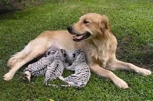 愛は種族をも超える、違う種類の動物の仲むつまじい写真いろいろ - GIGAZINE