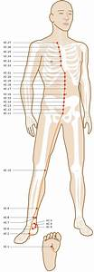 Acupuncture Points Guide