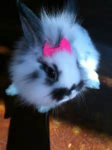 diy baby hair bows 11 best images about lionhead rabbits on