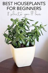 Common House Plants For Beginners  8 Plants You U0026 39 Ll Love