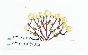 Comment Tailler Les Orchidées Pour Qu Elles Refleurissent : la taille de l 39 hortensia conseil sur l 39 poque et la ~ Melissatoandfro.com Idées de Décoration