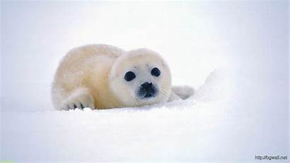 Sea Lion Animals Background Adorable Animal Face