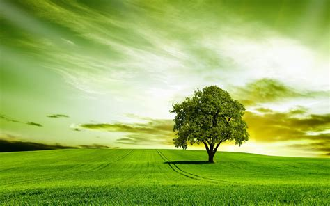 Beautiful Natural Trees Hd Wallpapers And Pictures Collection