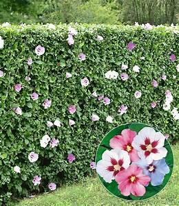 Gartengestaltung Pflegeleichte Gärten : schnellwachsende hecken f r individuelle gartengestaltung pflegetipps schnellwachsende hecken ~ Sanjose-hotels-ca.com Haus und Dekorationen
