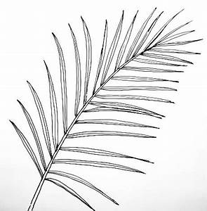How to draw a Date Palm Tree