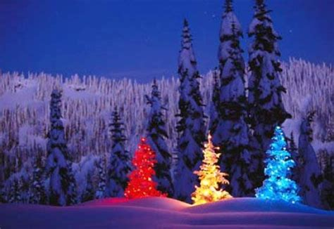 1001archives famous christmas trees around the world
