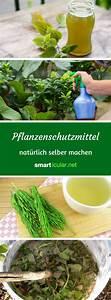 Pflanzen Gießen Urlaub : die 25 besten ideen zu pflanzen auf pinterest pflanze ~ Lizthompson.info Haus und Dekorationen