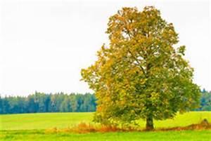 Laubbaum Mit Roten Blättern : b ume mit und ohne bl tter stockbilder bild 36445054 ~ Frokenaadalensverden.com Haus und Dekorationen