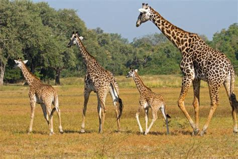Exclusive Big-game Zambia Safari