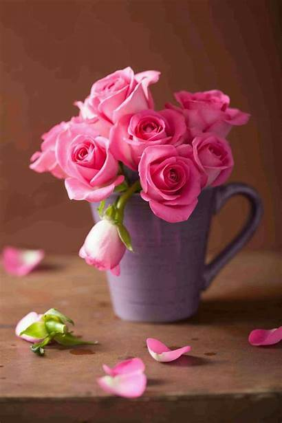 Rose Roses Vase Bouquet Flowers Flower Amazing