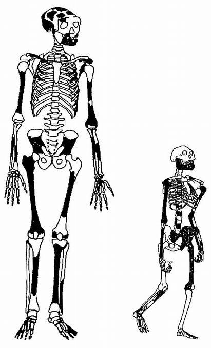 1808 Er Knm Homo Sapiens Early
