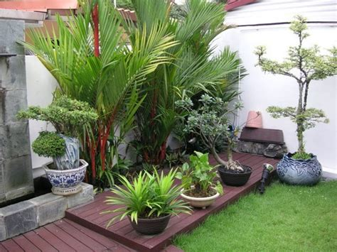 outdoor tropical plants for small garden design with