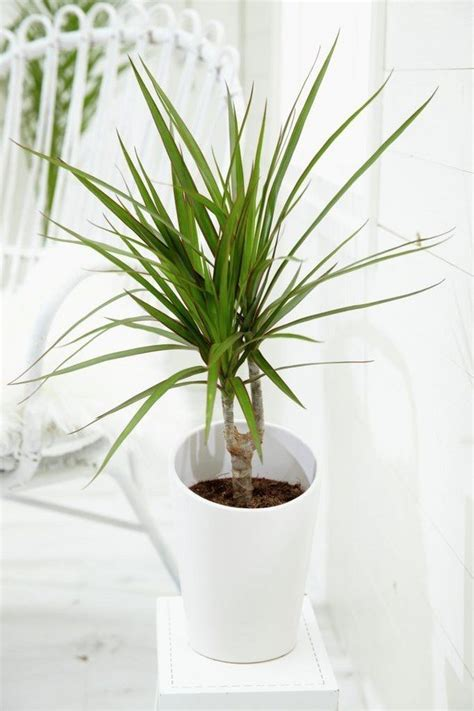 grow ls for indoor plants easy flowers to grow indoors a useful guide for indoor