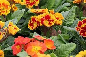 Pflanzen Schattig Winterhart : topfpflanzen 26 beliebte bl hende winterharte sorten ~ A.2002-acura-tl-radio.info Haus und Dekorationen