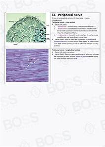Histology Slide Guide