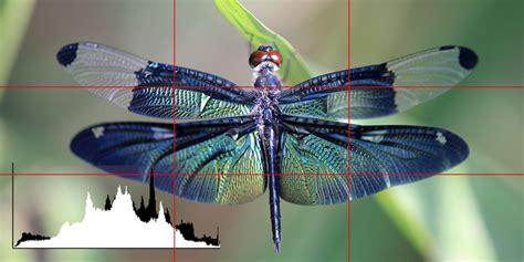 changing images  raw  jpeg bonusprint