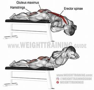 Flat Bench Hyperextension