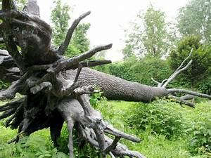 top 85 ideas about giuseppe penone sculpture on pinterest With jardin a la francaise photo 5 arbre des voyelles penone