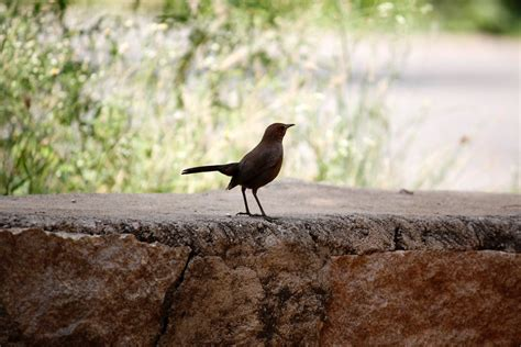 how to keep birds out of garden fly away how to keep birds out of your garden global