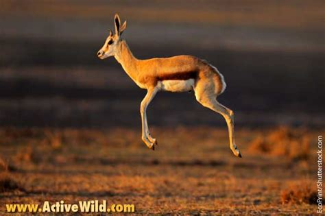 African Animals List, With Pictures, Facts, Information