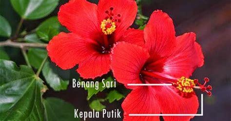 contoh bunga sempurna bagian bagian gambarnya