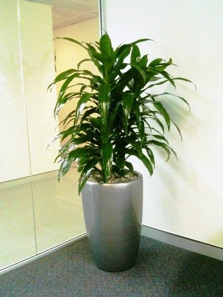 Floor Standing Planters by Floor Standing Planters Perfection Plant Hire
