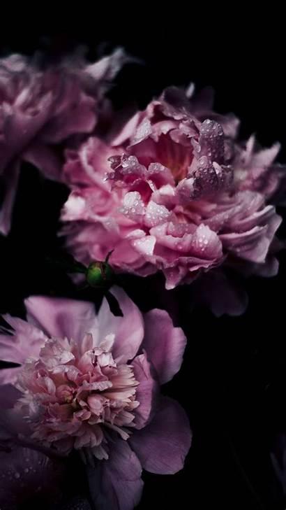 Iphone Flower Flowers Phone Wallpapers Purple Apple