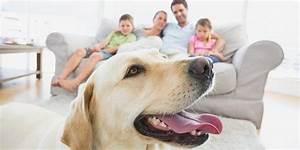 Mietwohnung Mit Hund : hund anschaffung infos tipps ~ Lizthompson.info Haus und Dekorationen