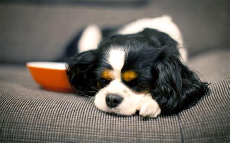 pulire tappeti in casa pulire una casa con animali istruzioni per l uso