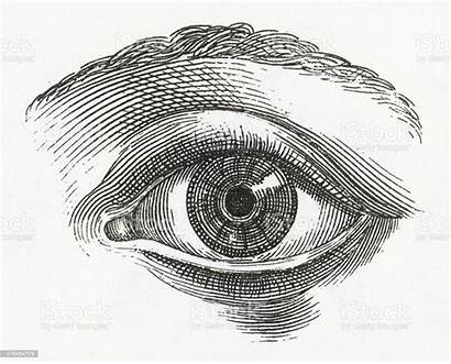 Eye Engraving Human Illustrations Illustration Vector Engraved
