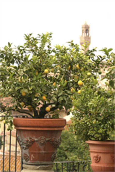 arbre fruitier nain en pot arbres fruitiers nains infos et prix des arbres fruitiers nains