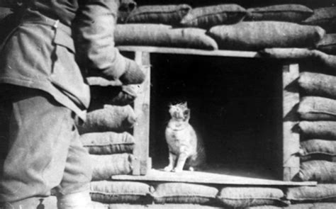 cat war mews the amazing and brave cats of world war 1 katzenworld