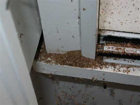carpenter ants 3 signs of carpenter ants venus pest company