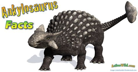 ankylosaurus facts information pictures  kids