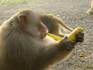 Peeling a banana this way WILL make your life (slightly ...
