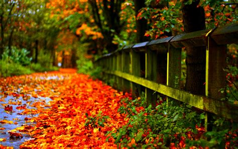 autumn leaves wallpaper wide screen wallpaper pkk
