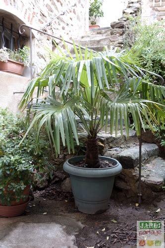 planter un palmier en pot exterieur de conception de maison