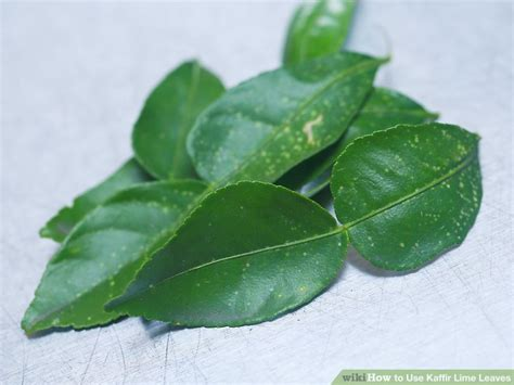 lime leaves how to use kaffir lime leaves 6 steps with pictures wikihow