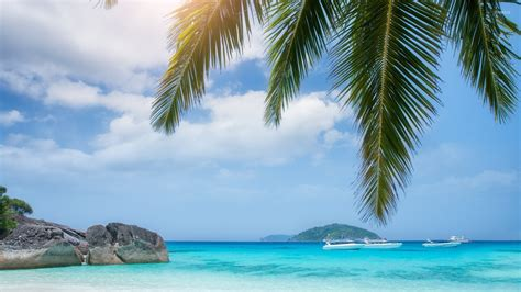 boats   rocky island viewed    palm tree