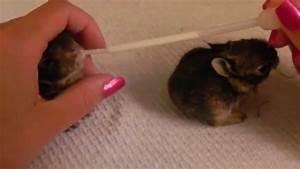 Baby Rabbits Feeding, Rescue Rabbits, Little Bunny Falling ...