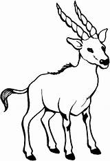 Goat Coloring Pages Horn Billy Sharp sketch template