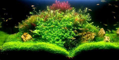 plantes aquarium eau douce lumirium lumimax eau douce 224 suspendre