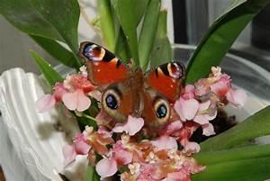 Schmetterlinge überwintern Helfen : schmetterlinge fotos schnappsch sse tiere tierwelt green24 hilfe pflege bilder ~ Frokenaadalensverden.com Haus und Dekorationen